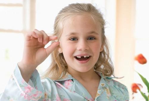 小孩换牙牙齿的结构图与说明